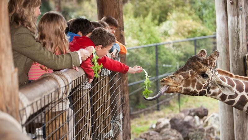 Education assistant supervising a group of students at a zoo.